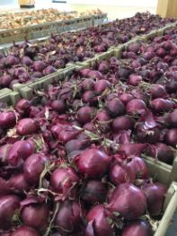 Yield boost for onion growers