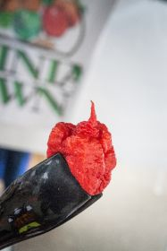 New record for world's hottest chilli