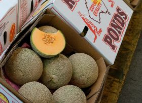 New Zealand bans Aus melons, cucumber, zucchini