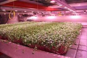 Taiwanese firm to build £18m vertical farm in York