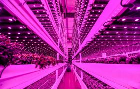 Half of new indoor growers 'have no ag experience'