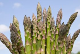 First British asparagus arrives at M&S