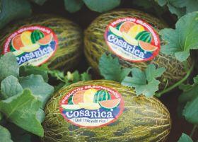 Melons break free of seasonal constraints