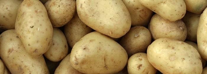 Future proofing Australian potatoes