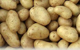 Thai promise for Australian potatoes