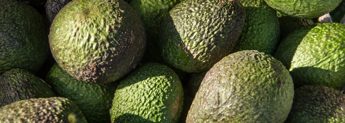 Australian avocado production grows