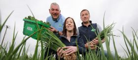 """Fantastic"" scallions sold locally"