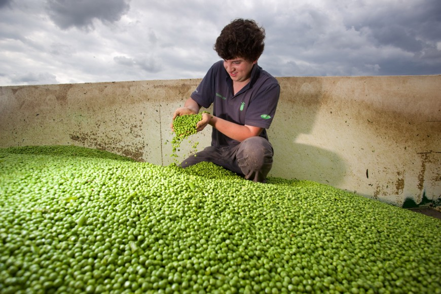 Image result for Great British Pea Week is back!