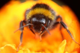 Bees 'get a taste' for neonics