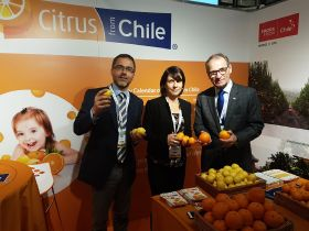 Chile citrus marketing campaign underway