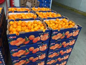 Chile to begin exporting citrus to China