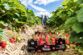 Val Venosta builds its berry category