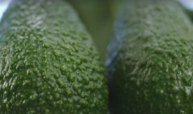 More markets open up for Colombian avocados