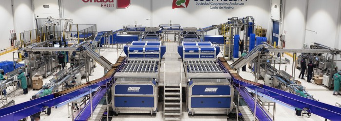 Europe's biggest blueberry line up and running
