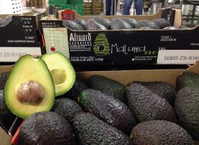 South African avocados face an off-year
