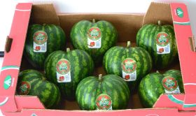 Anecoop says it with…watermelons