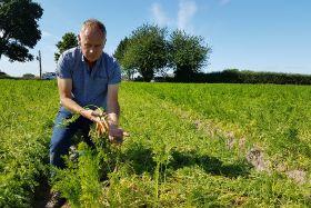 Weather devastates British carrot crop