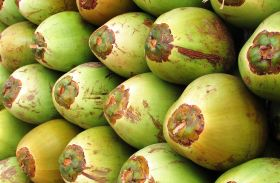 Thailand considers coconut import ban