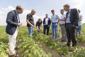 Albert Heijn: wild about potato sustainability