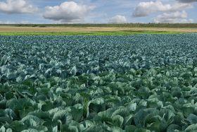 Heatwave could devastate winter crops too