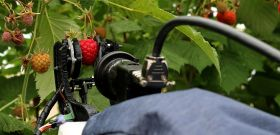 Berry growers trialling new raspberry picker bot