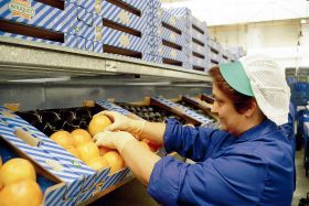 Spain 'yet to replace Russian produce market'