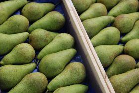 EU pears set fair