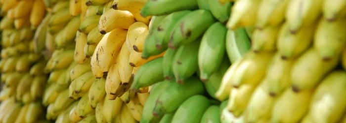 Philippine bananas risk losing South Korea