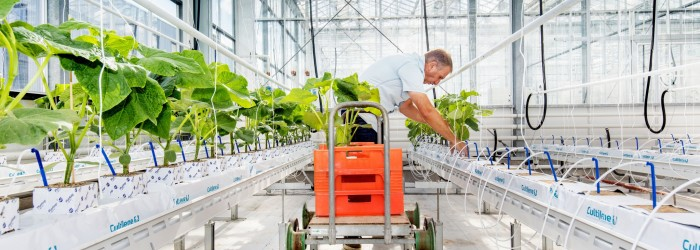 Cucumber challenge gets underway