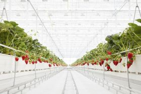 BerryWorld expands into US with new JV