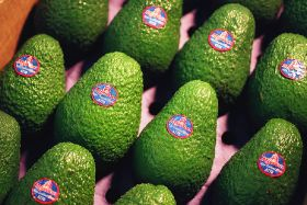 Mission plans big for avos in Colombia