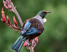 Could birds replace some pesticides?