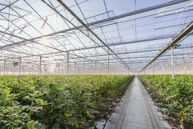 Horticulture tops EU productivity gains