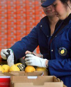 All Lemon returns to PMA
