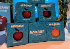 New apple Morgana offers 'tropical, aniseed' taste