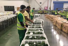 Pacific Fruits sends first Colombian avos to Saudi Arabia