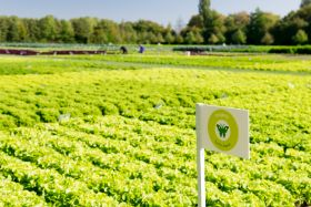 Organic market 'nowhere near saturated'