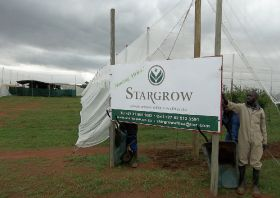Stargrow signs Lesotho deal