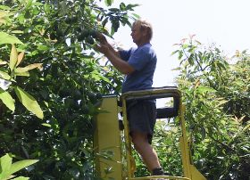 New Zealanders turn to horticulture for work