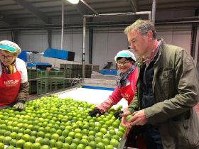 Eurobanan expands Spanish lime programme