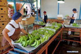 Bilateral banana boom