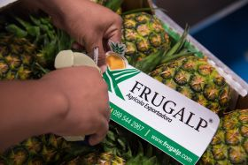 Frugalp hunts for new markets