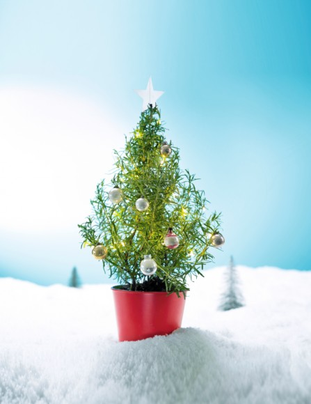 new product f26a6 19d4b Edible Christmas trees on sale at Waitrose