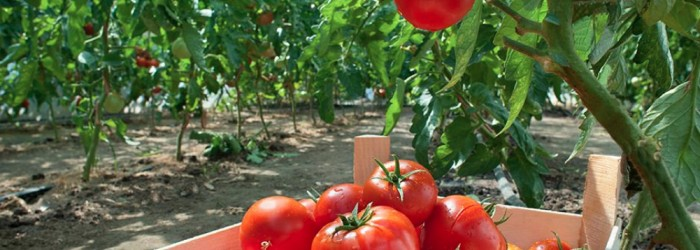 EC predicts better demand for fruit