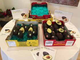 Australian avocados arrive in Japan