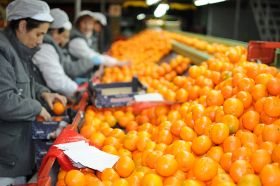 Citrus industry wins temporary reprieve