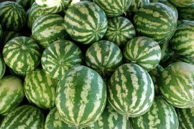 Hail fails to dent Murcian melon supply