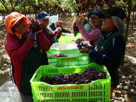 Pandemic hits Peruvian fruit exports