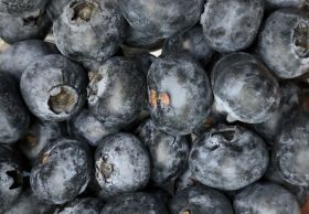 Stepac targets blueberry bloom