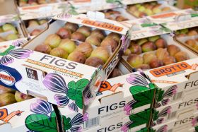 Steady growth for Brotto Figs
